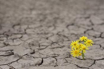 Das 7+7 gesunder Lebensführung® II – Die 7 Resilienzfaktoren